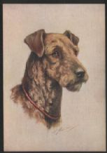 Cigarette card postcard dogs 1930's Airedale Terrier